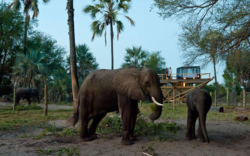 Abu Camp Okavango Delta Botswana Safari