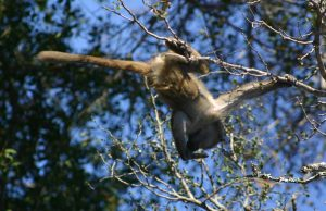South Africa Safari Kruger National Park: Little Baboon in Tree
