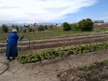 Cape Town Township Community Garden