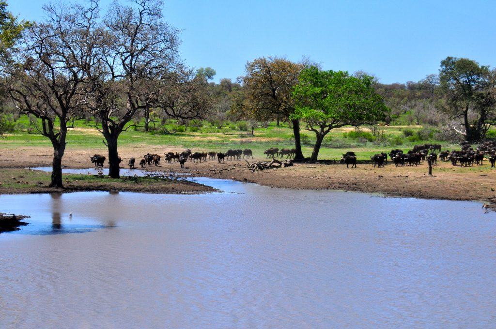 water hole in Kruger National Park.