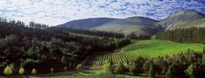 Elgin outer Cape Winelands.