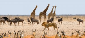 Etosha Game Park Namibia