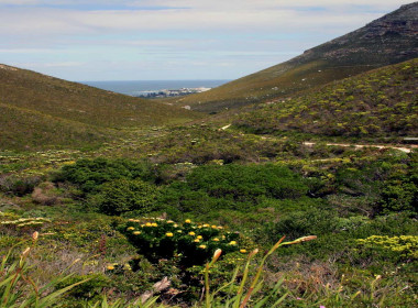 Hermanus fern Kloof reserve whale watching