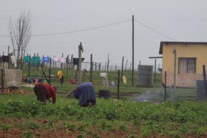 Quno Village, Nelson Mandlas Village.