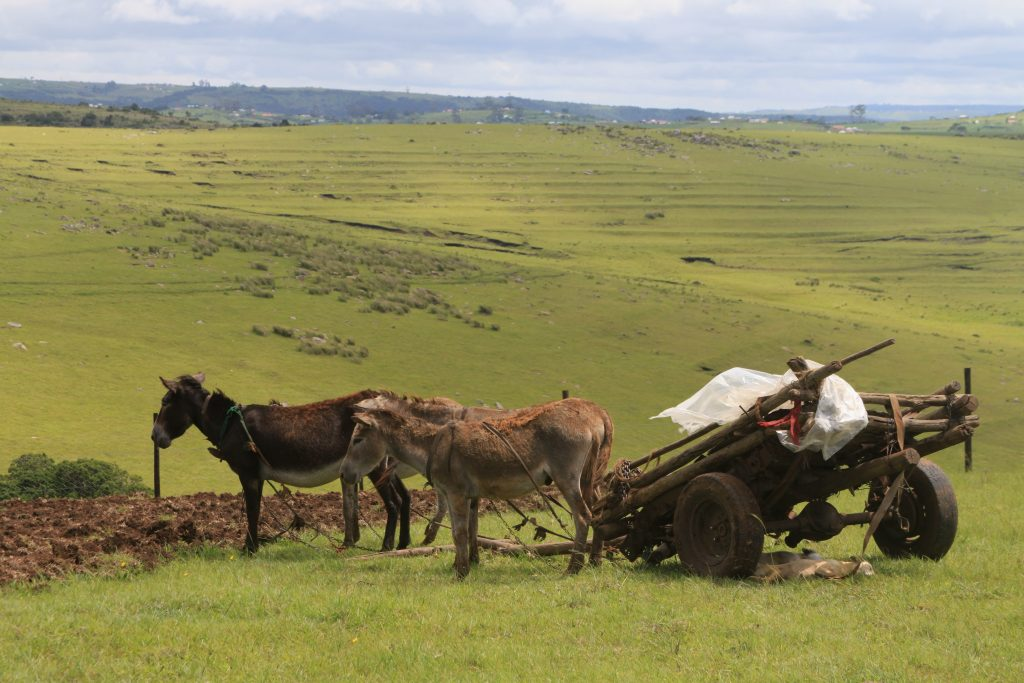 Rural Eastern Cape Cultural tours