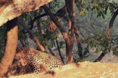 Spot him or her Northern Kruger National Park walking safari