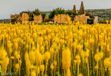 Namaquland flowers South Africa