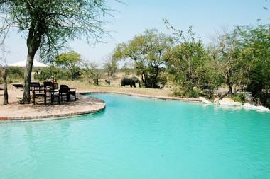 Ngala Lodge Pool Kruger safari