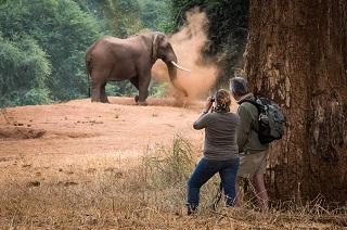 Elephant Kruger National Park.walking safari