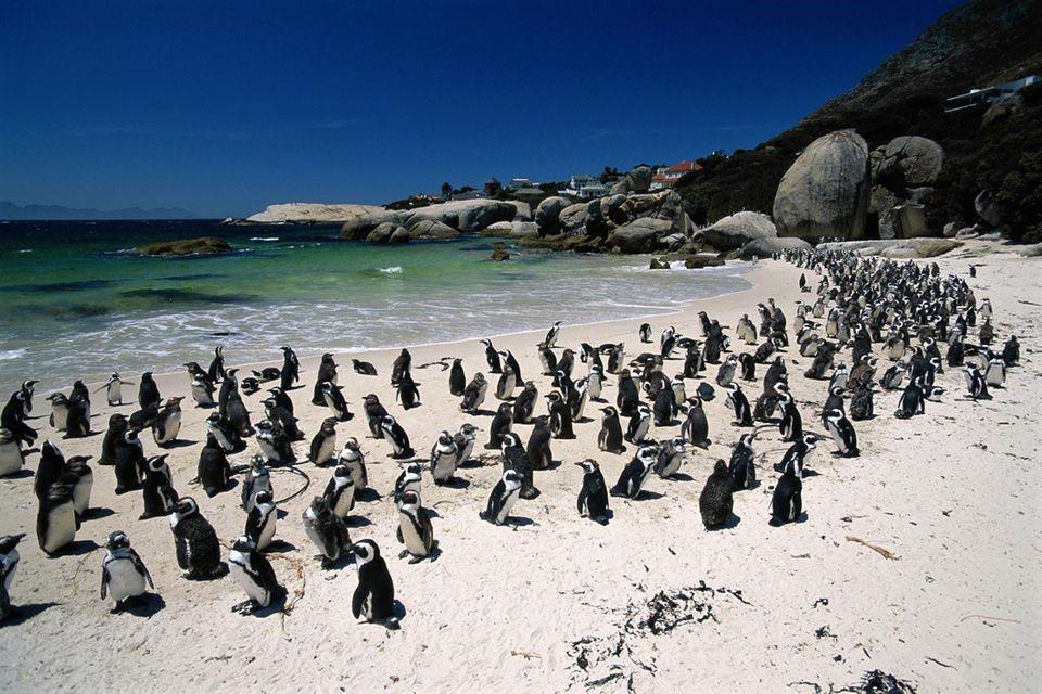 Penguins Cape Point Tour
