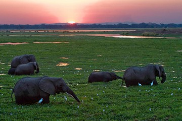 Rukomechi Camp Mana Pools Zimbabwe safari