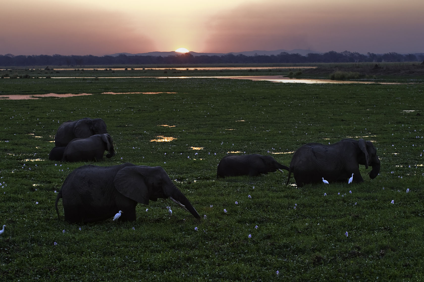 Ruckomechi Camp Mana pools