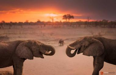Hwange Park zimbabwe safari