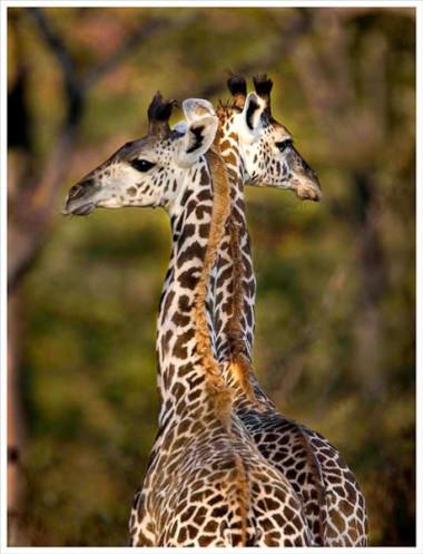 South Luangwa Zambia Safari