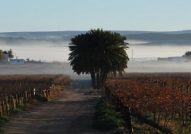 Upington,wineries, green belt