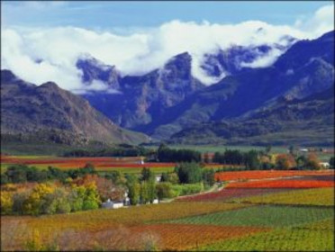 cape winelands scenery