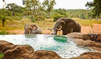 Elephants Motswari