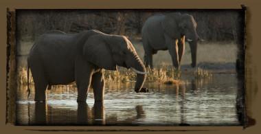 elephants Selinda reserve