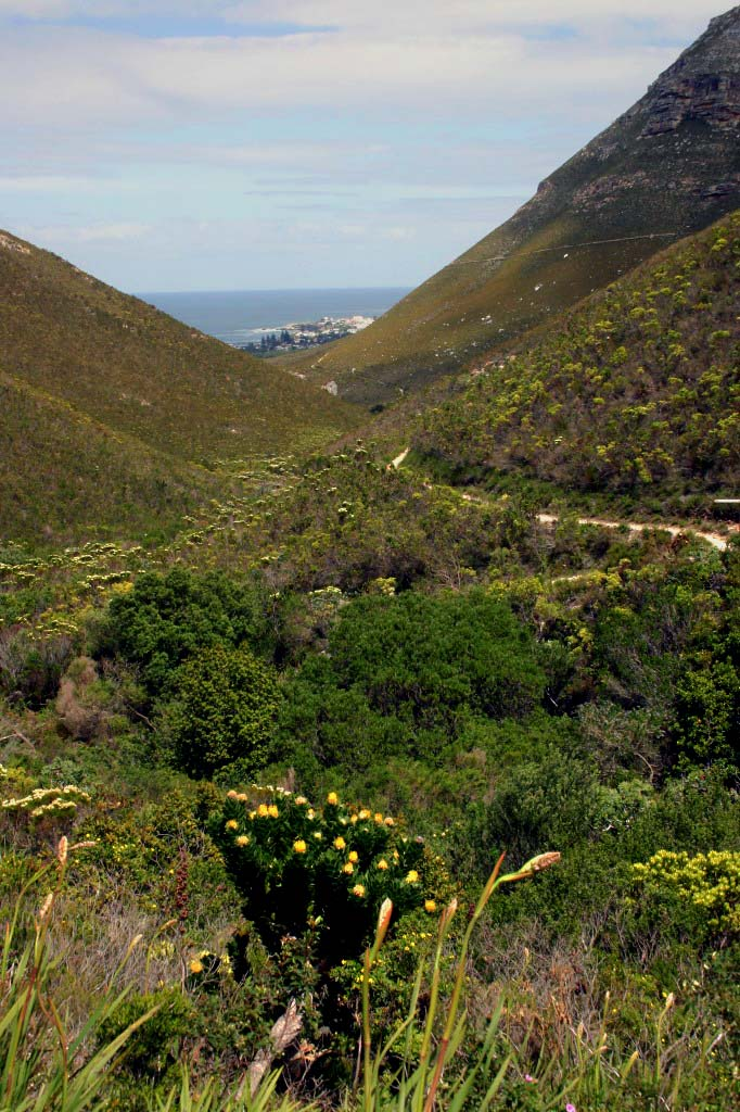 Fern Kloof Nature Reserve Hermanus.