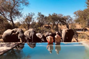 honeyguide pool South Africa safari