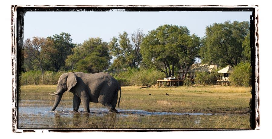 Zarafa Camp selinda reserve Botswana safari