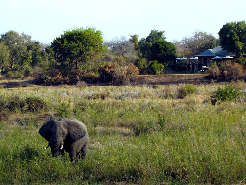 Mala Mala Sable Camp sabi sands Kruger National Park
