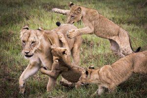 mombo botswana image credit to crookesandjackson