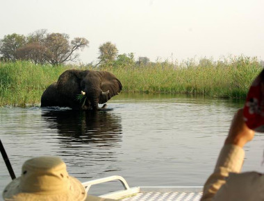 Okavango Delta river safari elephant