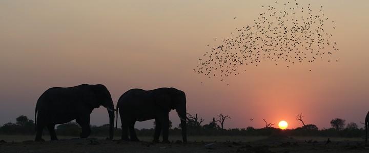Savutie Elephant Camp  savuti Botswana Safari