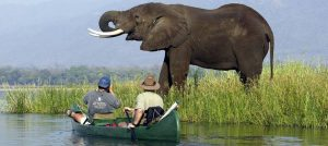 mana pools Africa safaris-Zimbabwe