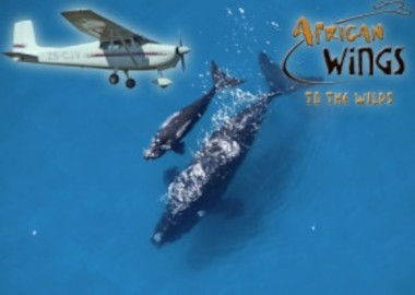 WHALE WATCHING BY PLANE HERMANUS CAPE TOWN