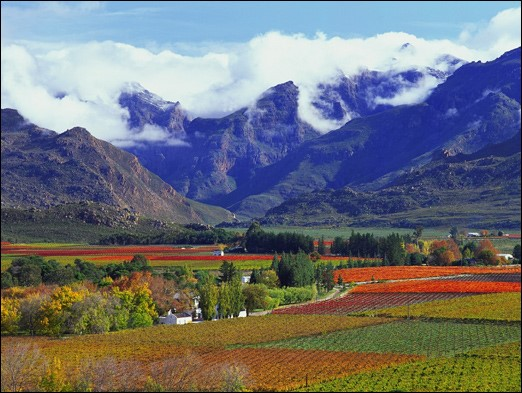 Cape Wineland Cape Town